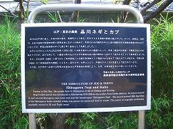 品川神社 (十社巡り 9)_c0187004_2130313.jpg
