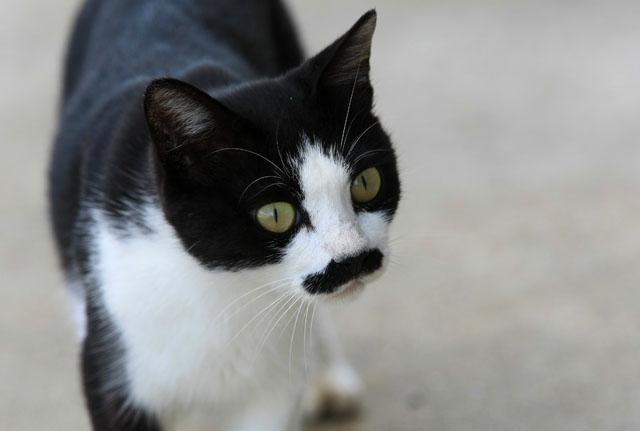 ・・・吾輩は猫である・・・_d0074828_2320164.jpg