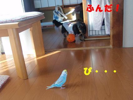 c0151866_112157.jpg