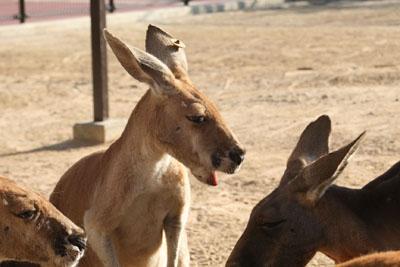 王子動物園_e0173183_18593261.jpg