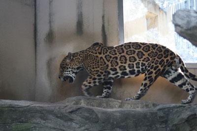 王子動物園_e0173183_18594418.jpg