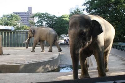 王子動物園_e0173183_18595821.jpg