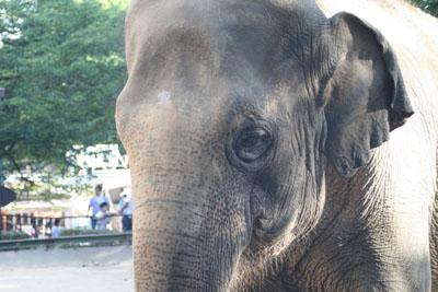 王子動物園_e0173183_1901349.jpg