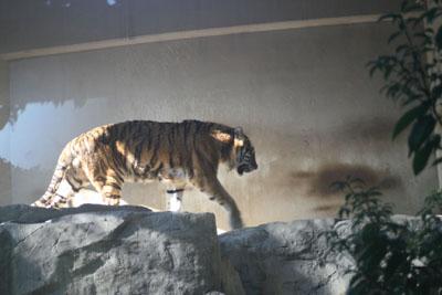 王子動物園_e0173183_1902595.jpg