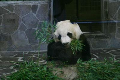 王子動物園_e0173183_1903944.jpg