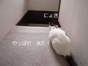 c0139488_0323781.jpg