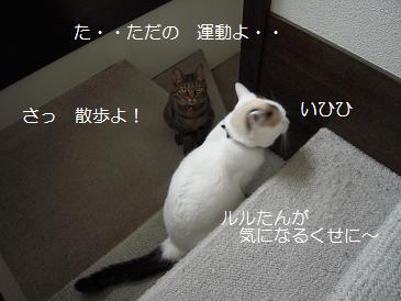 c0139488_0325981.jpg