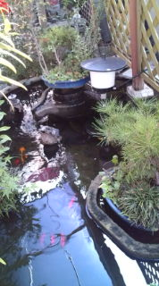 池続きです_f0201790_108263.jpg