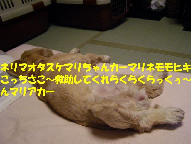 b0067012_12593137.jpg