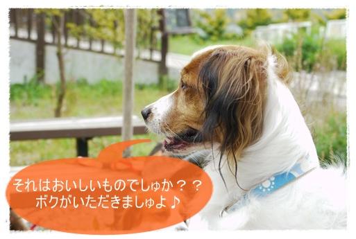 f0080745_053571.jpg