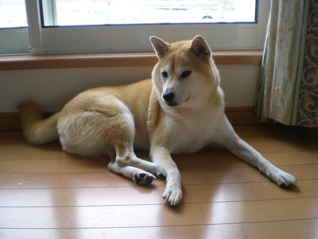 2009年9月9日(水)心ちゃん無実と伊勢えび祭り!_f0060461_19571992.jpg