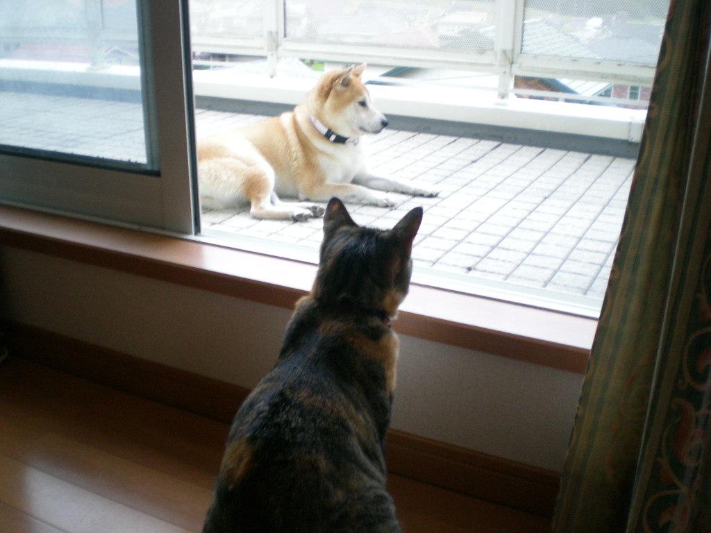 2009年9月9日(水)心ちゃん無実と伊勢えび祭り!_f0060461_19591280.jpg