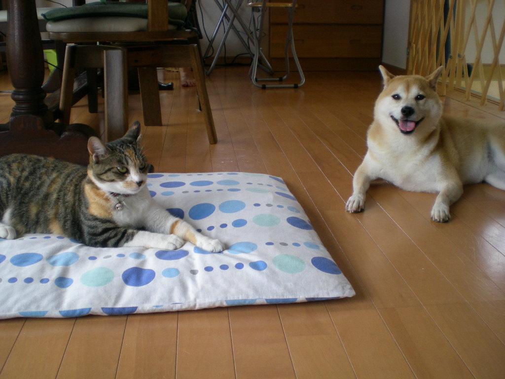 2009年9月9日(水)心ちゃん無実と伊勢えび祭り!_f0060461_2139979.jpg