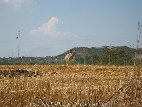古代都市エリス遺跡付近にいたロバ子さん_f0037264_20155424.jpg
