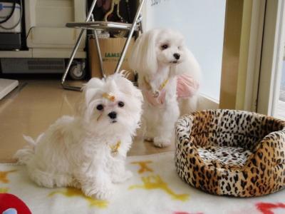 カリとエンジェル+3姉妹〜とっても元気で〜す(^^)_b0001465_1626255.jpg