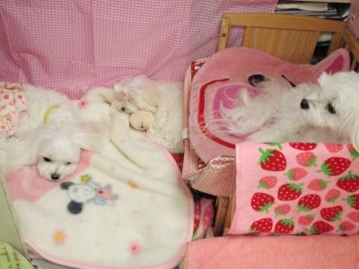 カリとエンジェル+3姉妹〜とっても元気で〜す(^^)_b0001465_1641129.jpg