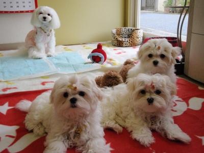 カリとエンジェル+3姉妹〜とっても元気で〜す(^^)_b0001465_1659129.jpg