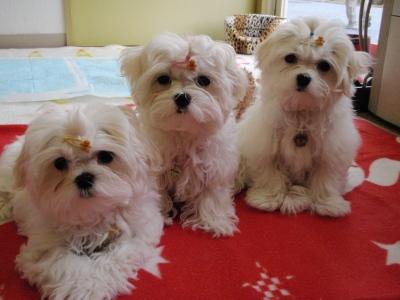 カリとエンジェル+3姉妹〜とっても元気で〜す(^^)_b0001465_1703823.jpg