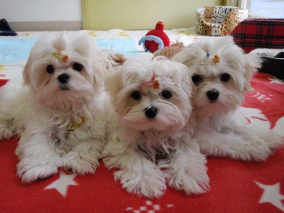 カリとエンジェル+3姉妹〜とっても元気で〜す(^^)_b0001465_1713375.jpg
