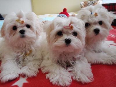 カリとエンジェル+3姉妹〜とっても元気で〜す(^^)_b0001465_1722498.jpg