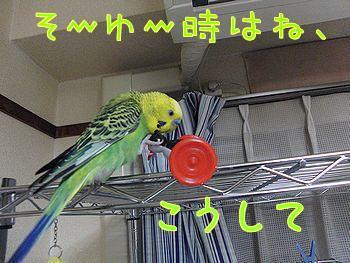 f0196665_1224610.jpg