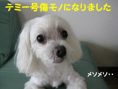f0145192_1554323.jpg