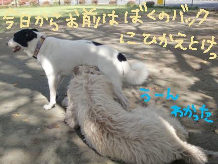 f0176830_18432634.jpg