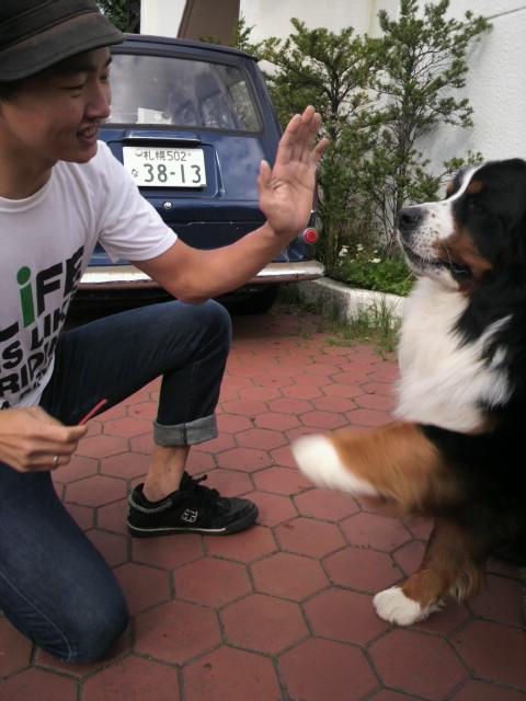 犬_e0173533_10375939.jpg