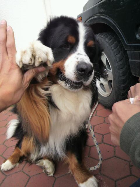 犬_e0173533_10391382.jpg