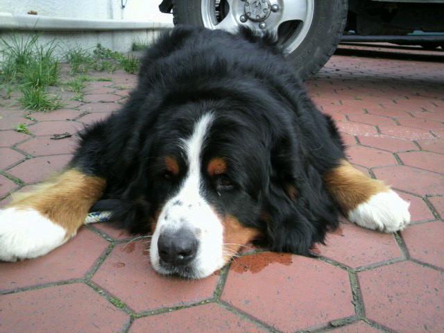 犬_e0173533_10452641.jpg
