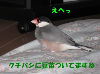 b0158061_21213297.jpg