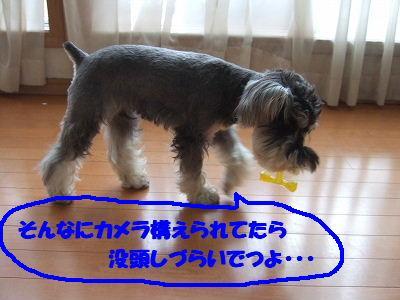 b0143879_1135566.jpg