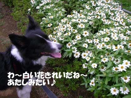 f0114893_1420011.jpg