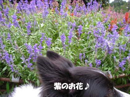 f0114893_14201053.jpg