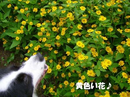 f0114893_14202059.jpg