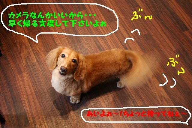 b0130018_1875755.jpg