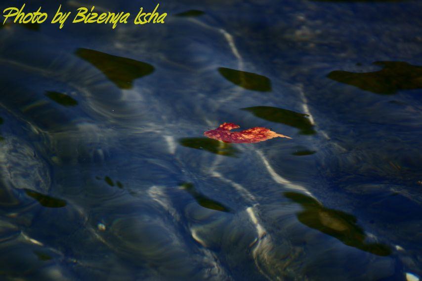 『Leaf』_d0086248_713153.jpg
