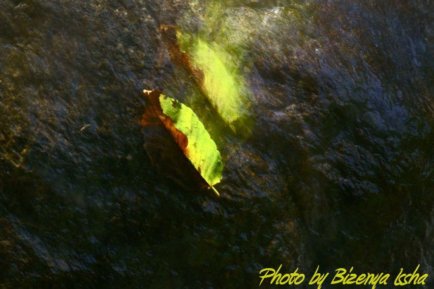 『Leaf』_d0086248_714777.jpg