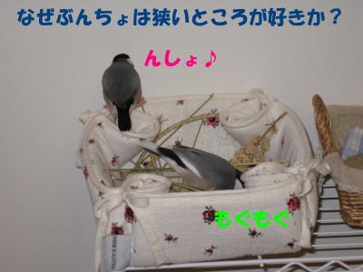 b0158061_19531730.jpg