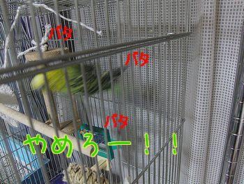 f0196665_010676.jpg