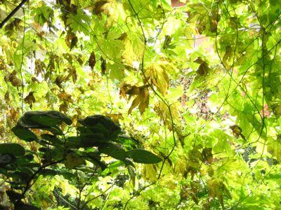 夏が過ぎ秋になり・・・。_e0003273_15482539.jpg