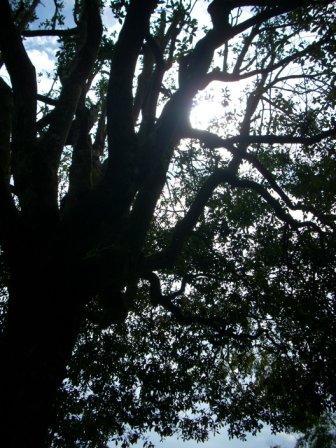 お隣の大きな大きな銀木犀から、_f0177373_1824512.jpg