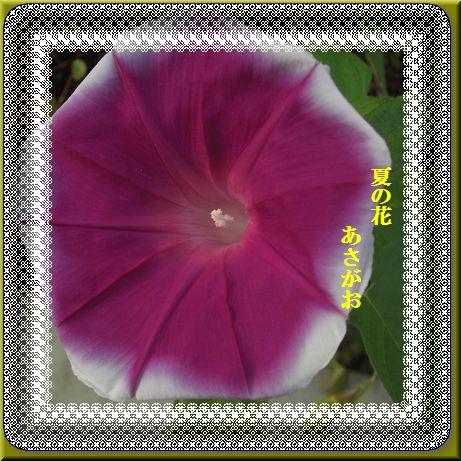 d0070198_15563591.jpg