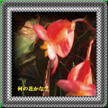 d0070198_16959100.jpg