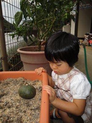 お野菜とマコちゃん_e0166301_17502036.jpg