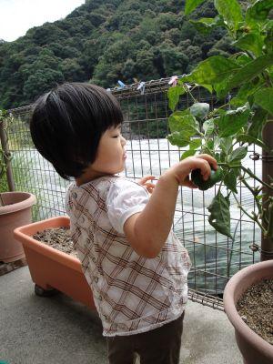 お野菜とマコちゃん_e0166301_17573270.jpg