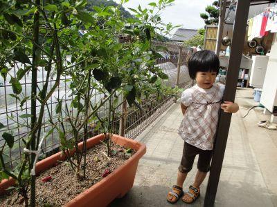 お野菜とマコちゃん_e0166301_17583032.jpg