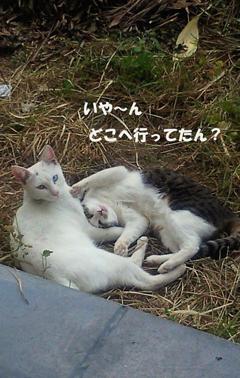 恋の行方_b0105719_9225964.jpg