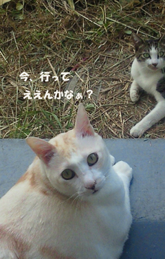 恋の行方_b0105719_932227.jpg