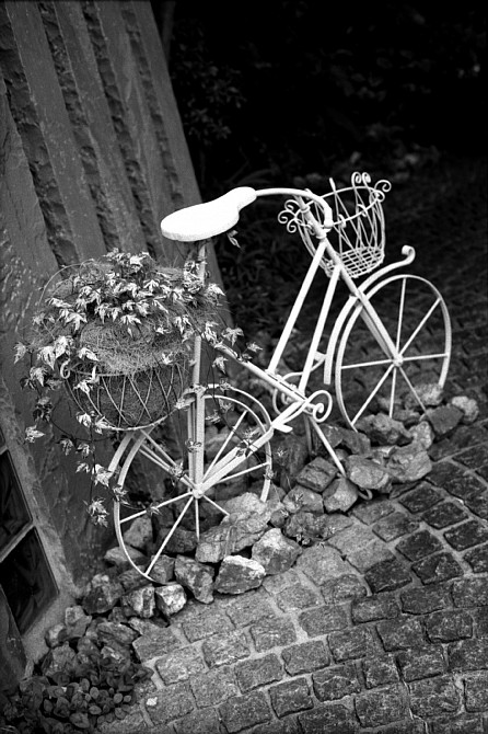 2009-9-13 蔦と白い自転車_c0136330_18421923.jpg
